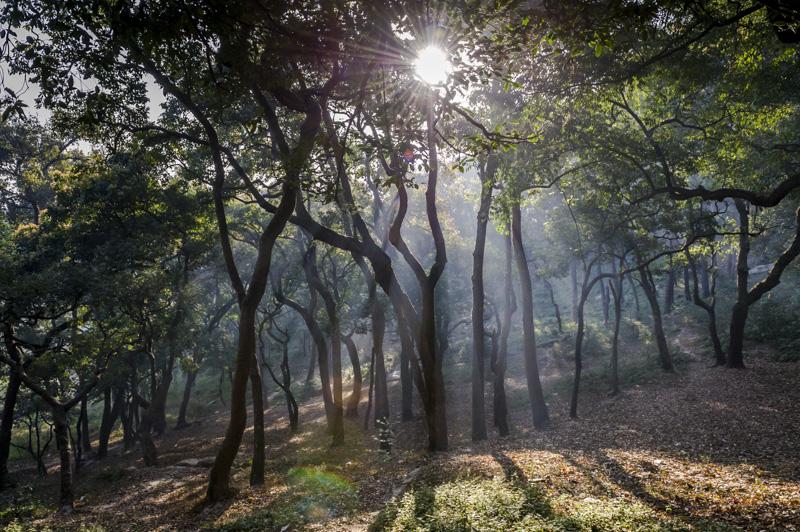 nepal__20120311__DSC5918